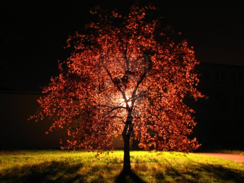 Tree_by_Mich_cz